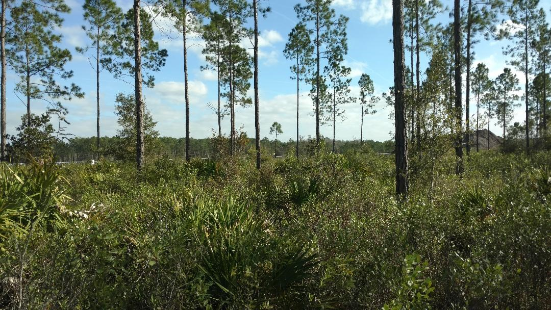 HIGHWAY FRONTAGE 106 ACRES BETWEEN JACKSONVILLE & LAKE CITY