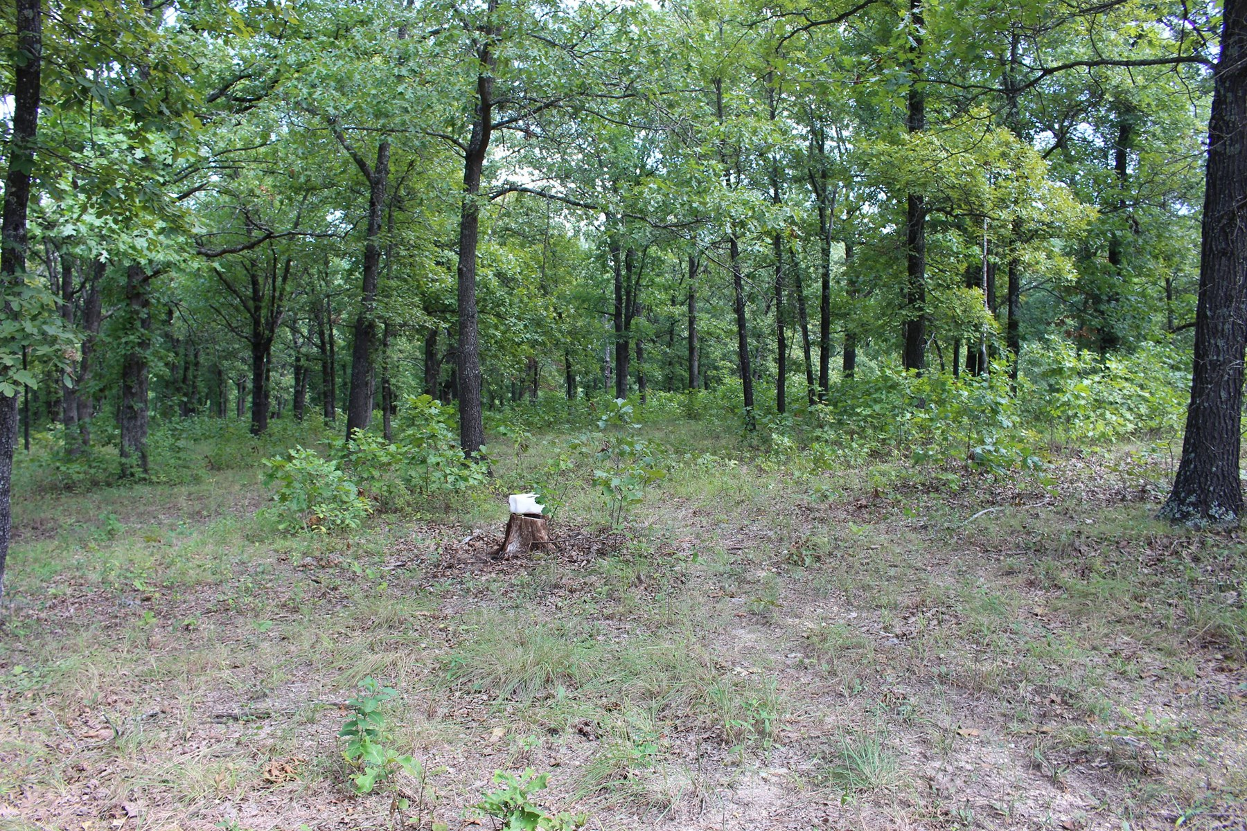 Missouri Ozarks Hunting Land for Sale