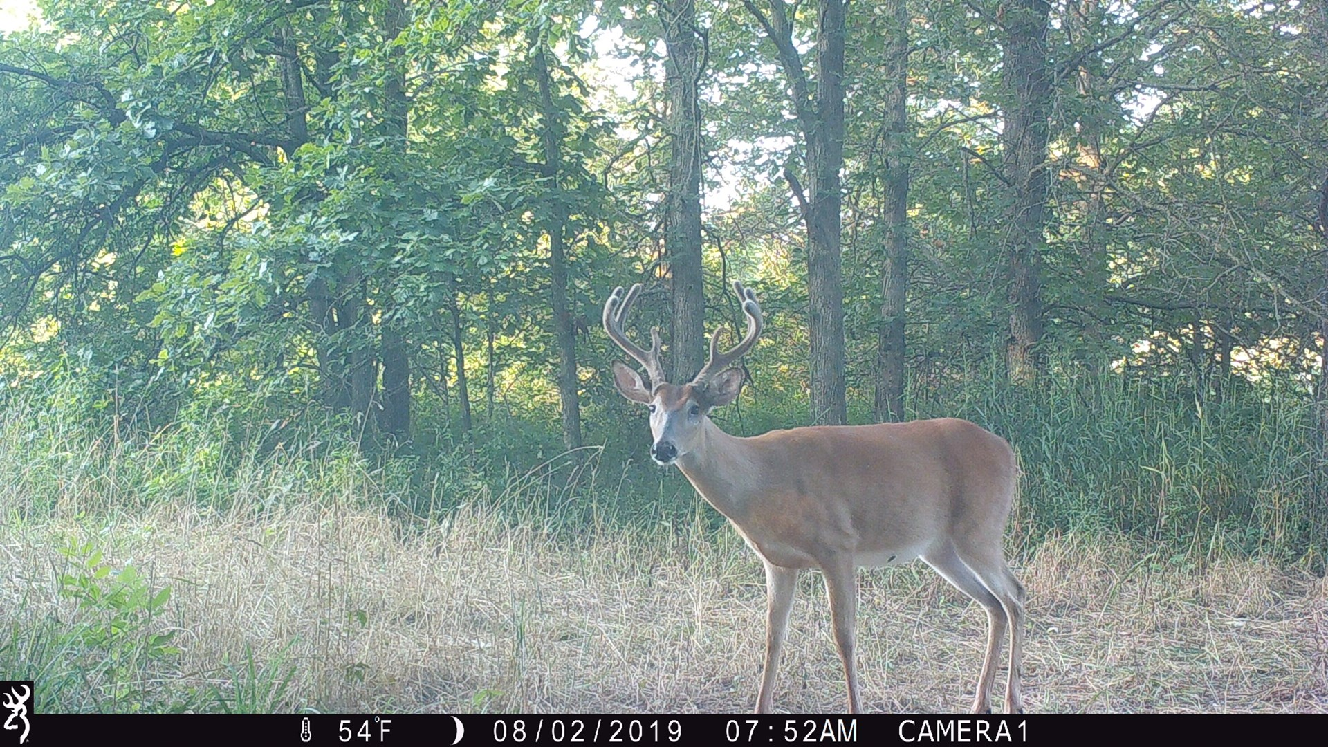 Northeast Missouri Hunting Diverse Income Combo Farm