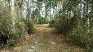 SECLUDED 160 ACRES FOR SALE IN NORTH FLORIDA