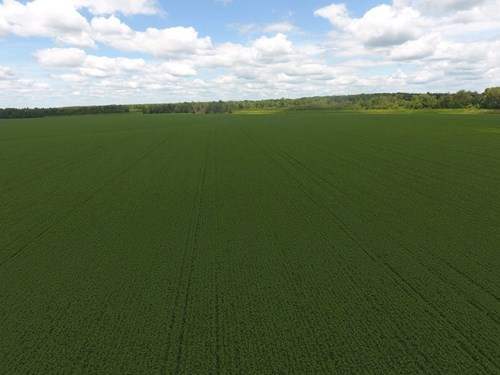 1,341+/- Acres, Excellent Row Crop Bottom, Chillicothe MO