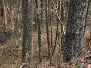 WOODED BUILDING LOT WITH CREEK FOR SALE IN ABINGDON VA