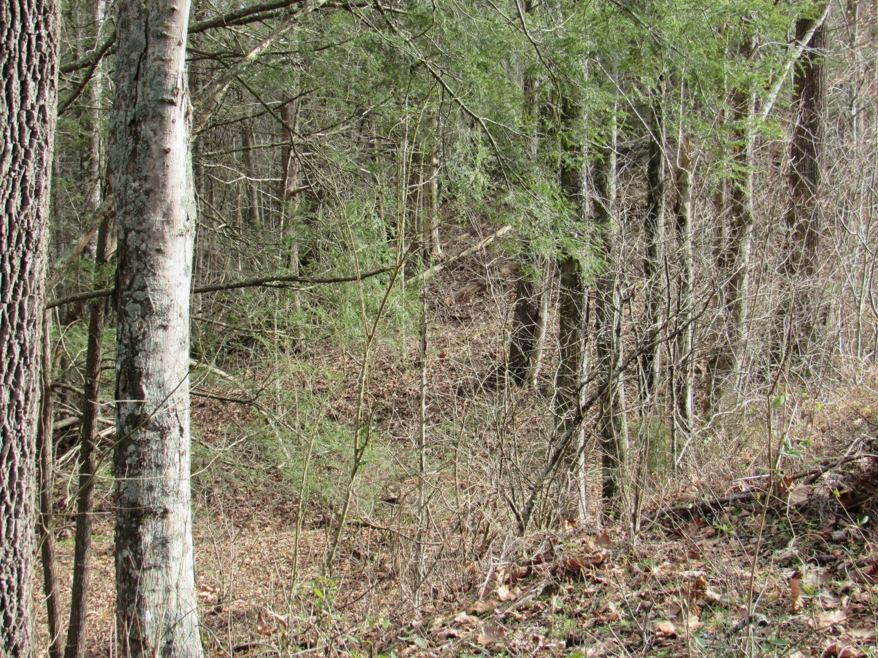 Wooded Building Lot With Creek For Sale in Abingdon, Va