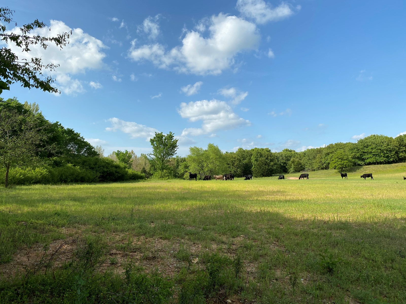 OKLAHOMA HUNTING & GRAZING LAND FOR SALE- WILSON, OK