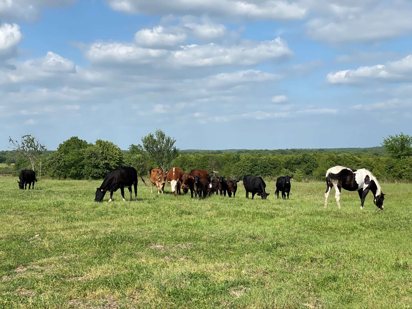 HUNTING & GRAZING LAND FOR SALE WILSON, OK | CARTER COUNTY