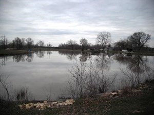 200+ ACRES IN BOWIE COUNTY, TEXAS