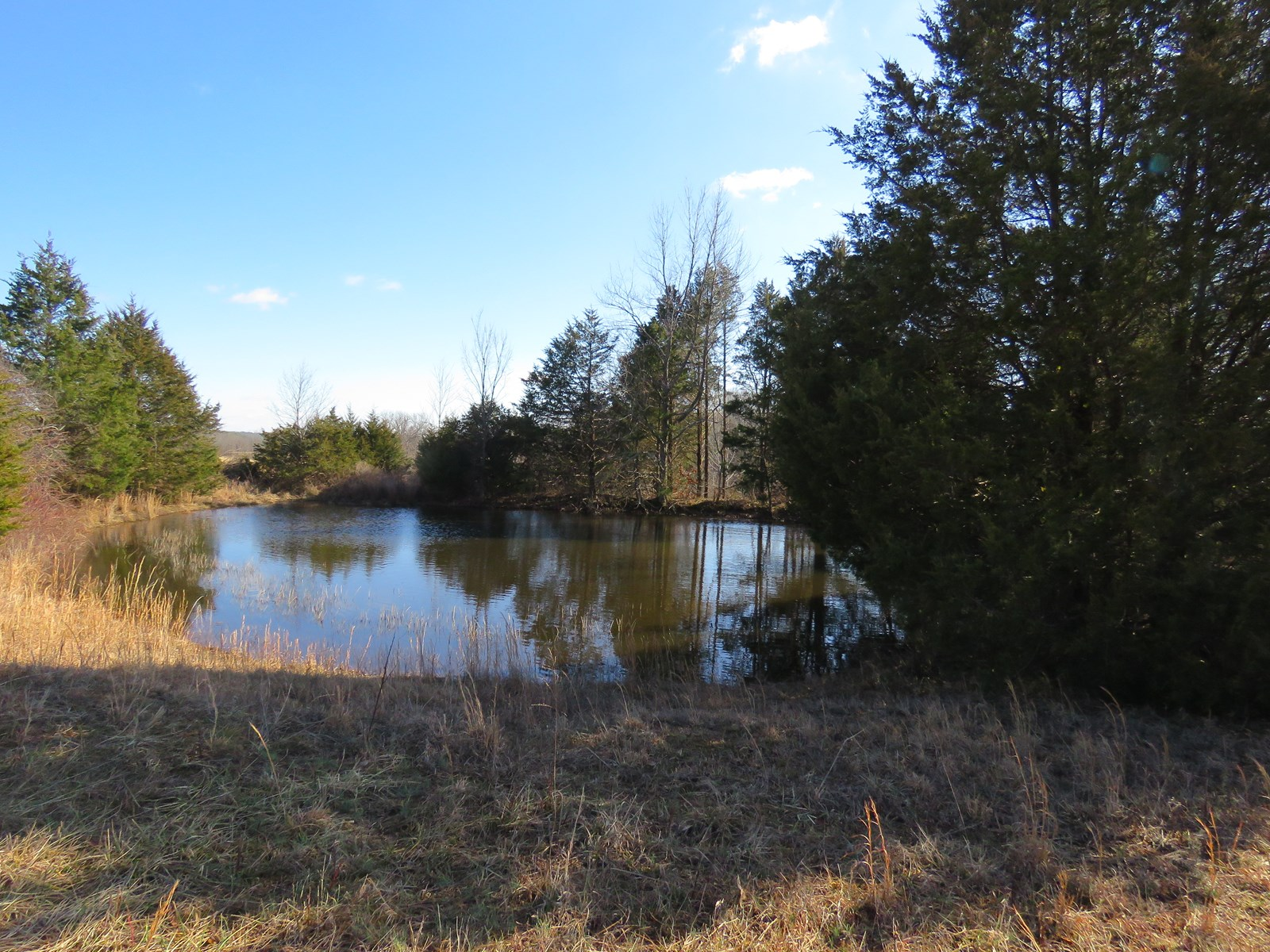 Land for sale in the Ozarks! Ava, mo