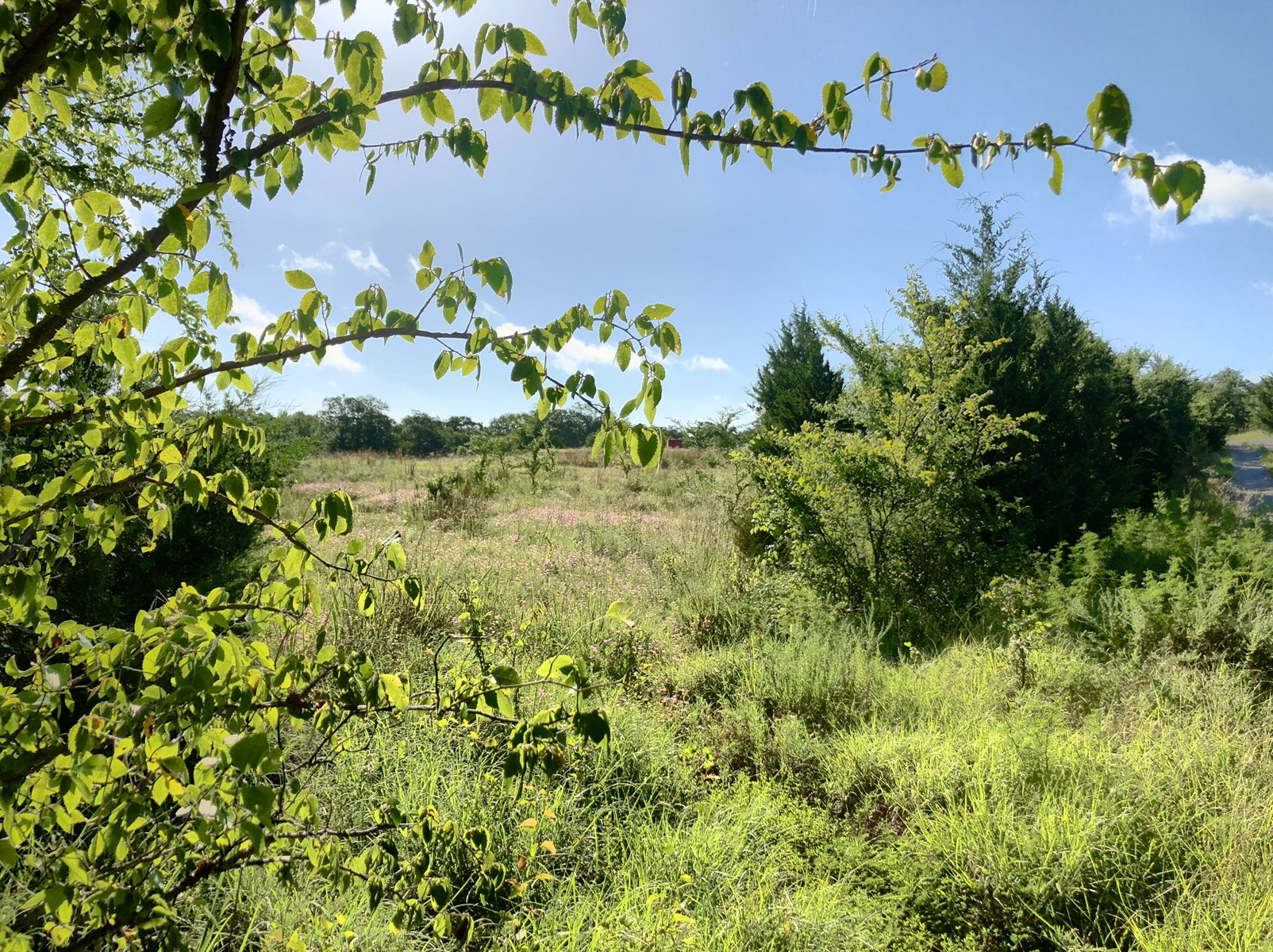 40 ACRES OF RECREATIONAL LAND FOR SALE IN MARSHALL COUNTY