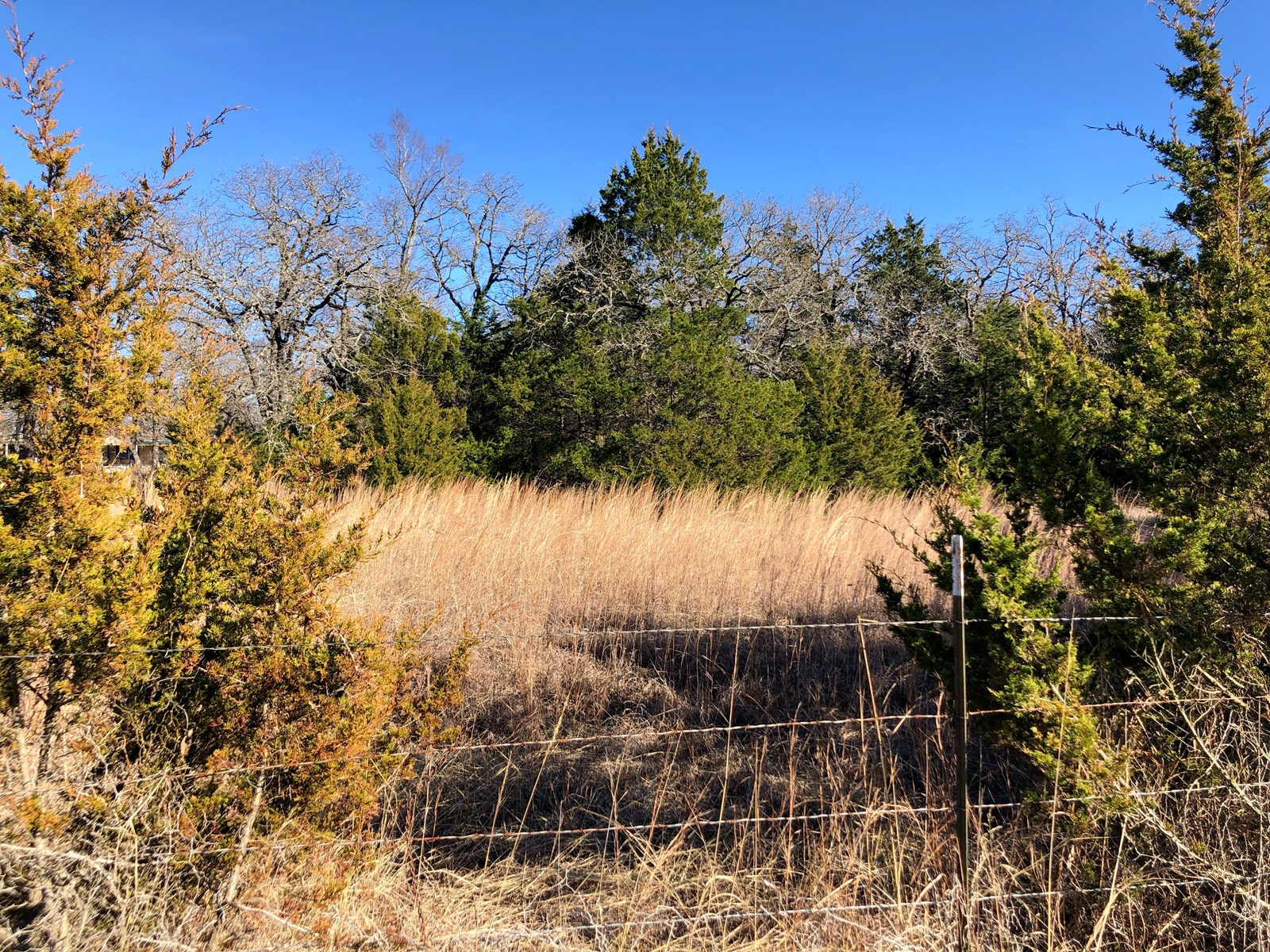 20 ACRES OF RECREATIONAL LAND FOR SALE-TO BOW HUNT OR BUILD