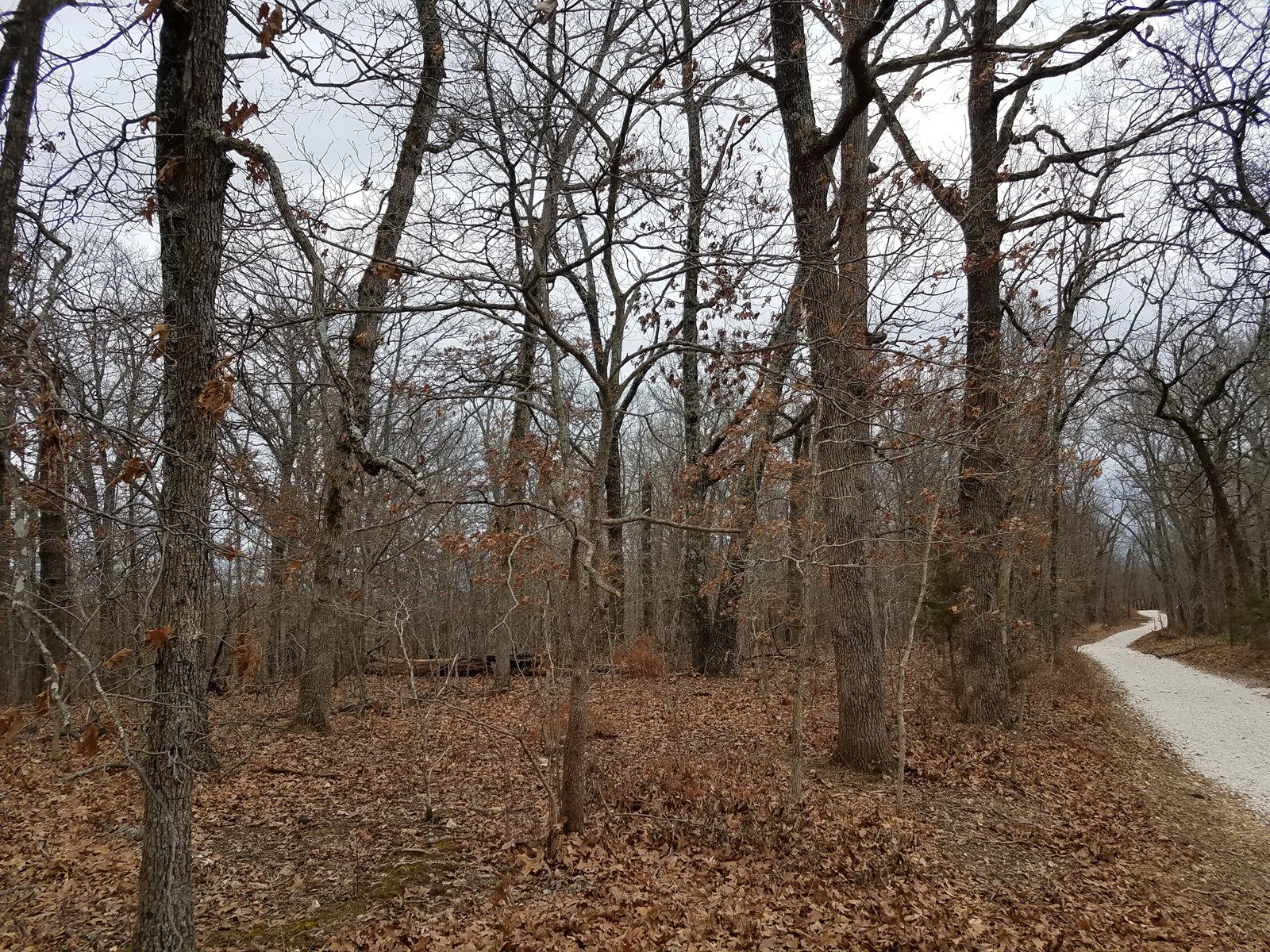 Land For Sale in Missouri! 17 Acres Land, Hunt, Camp, Build!