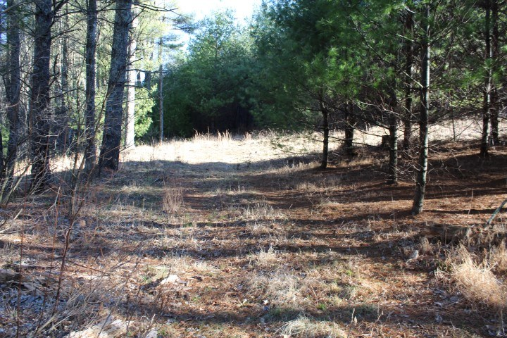 50 ACRES OF LAND FOR SELL IN FLOYD COUNTY, VA