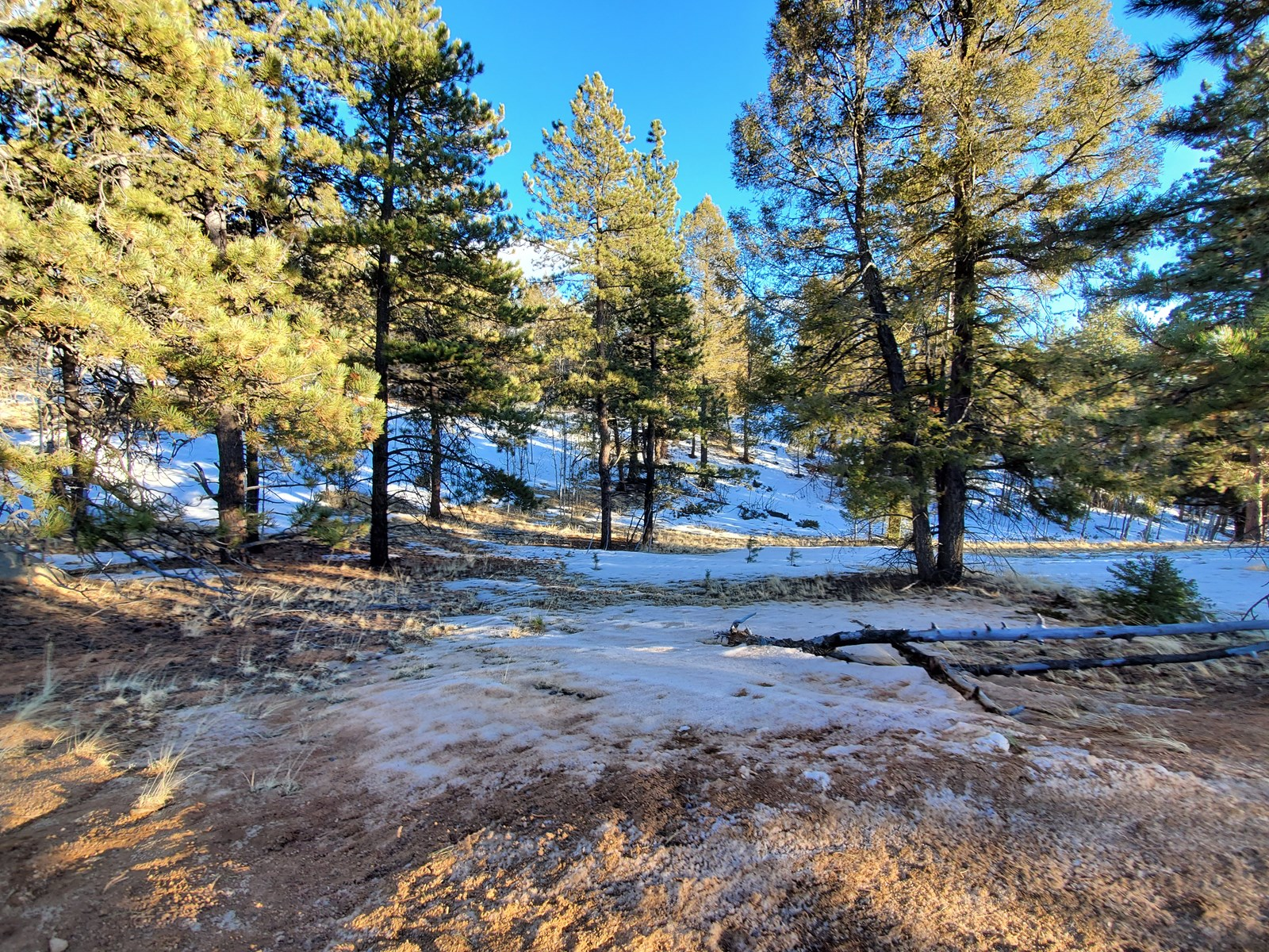 Land for Sale near Mueller State Park, Florissant CO