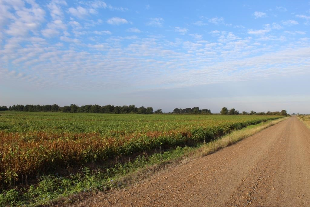 Highly Tillable Row Crop Farm Land Holland MO - Pemiscot Co