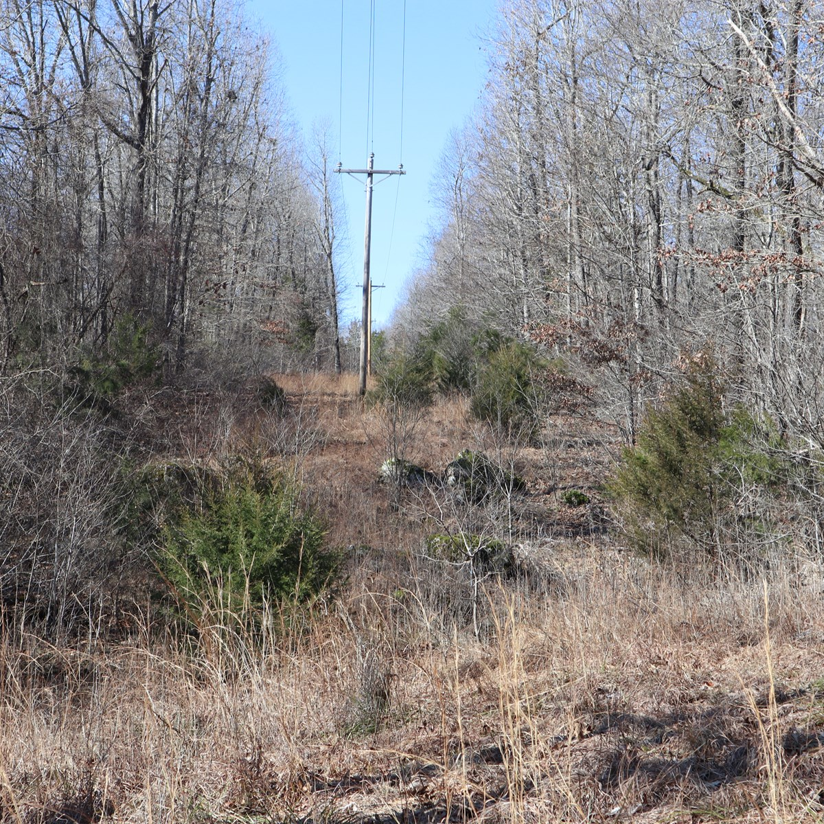 LAND  FOR SALE CLOSE TO LAKE NORFORK