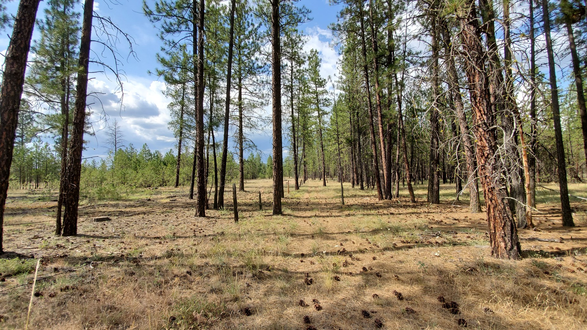 Private 6 acre treed parcel in TumTum for sale