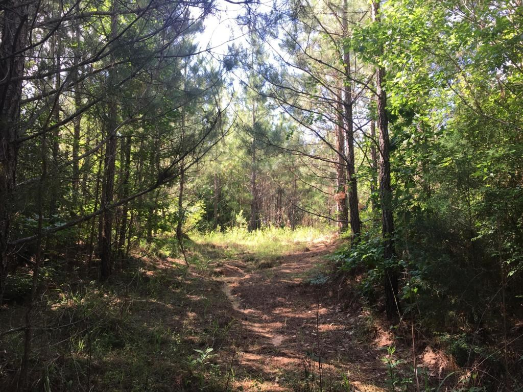 Land for Sale - Turner Rd, Preston, MS - 13.5 Acres