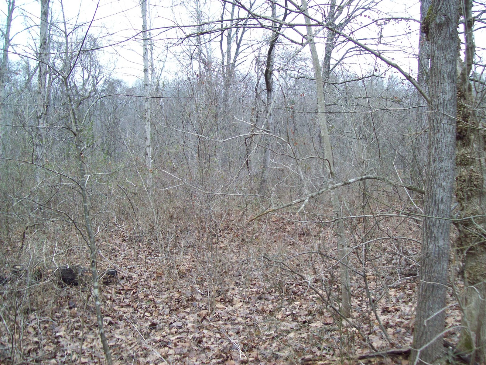 Lot at Black River near Piedmont Missouri