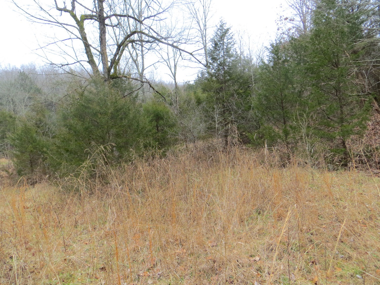 Acreage - Hunting Land for Sale in AR, Ozarks