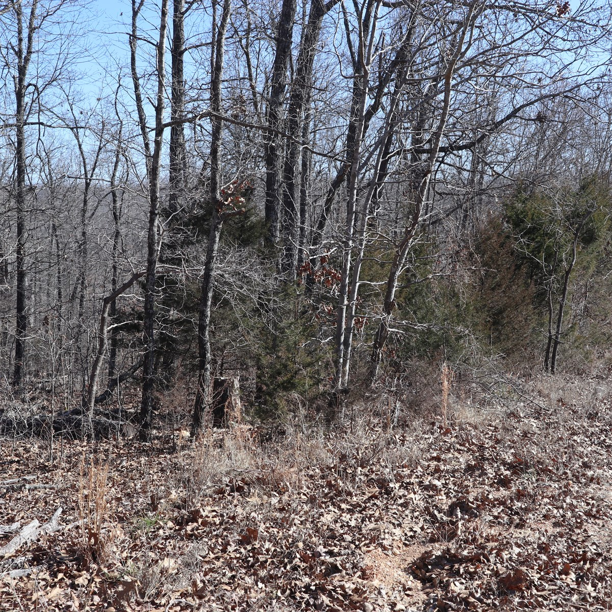 VACANT LAND FOR SALE NEAR ASH FLAT, ARKANSAS