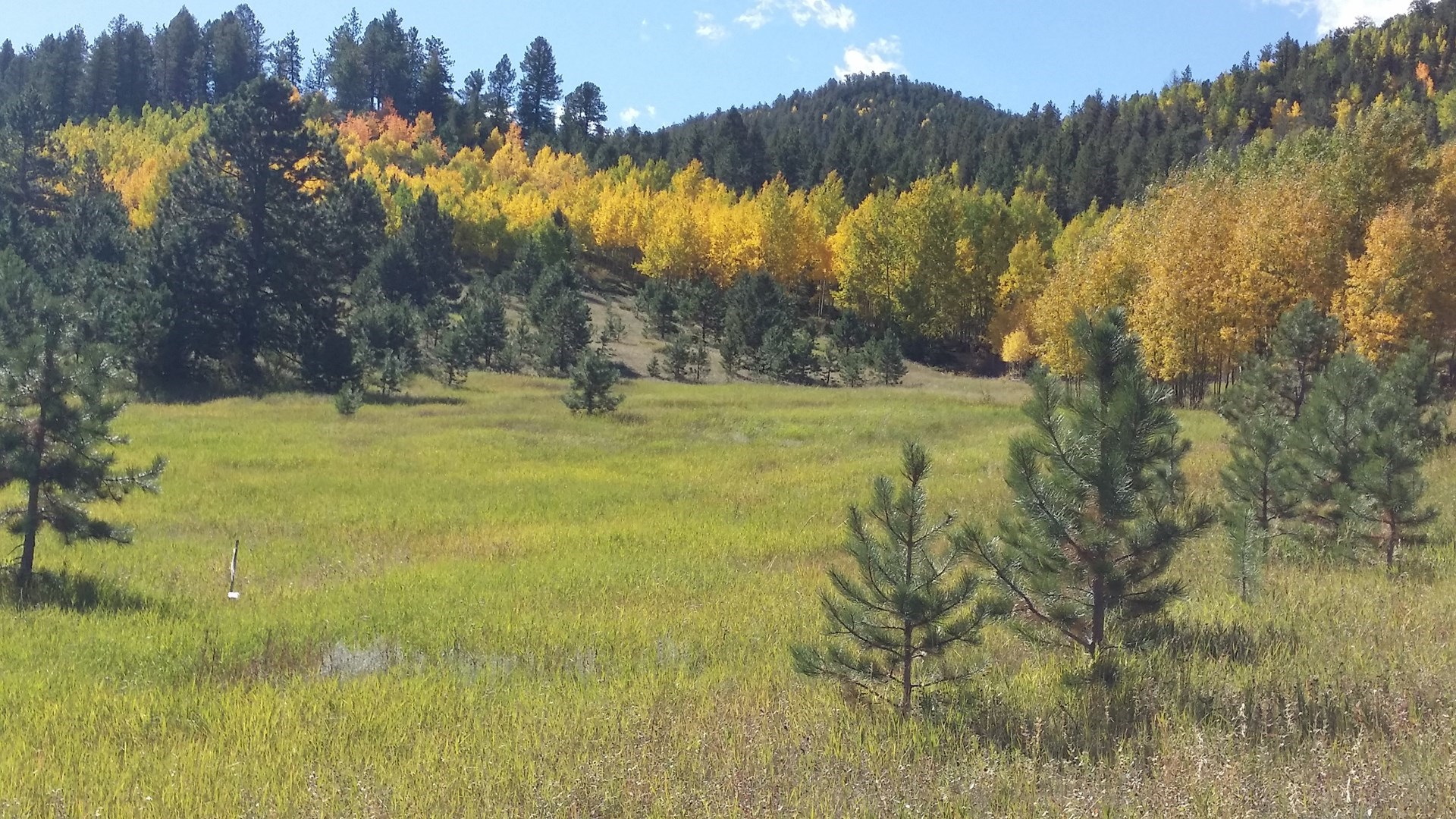 40 Acres with Pond in Central Colorado Near Cripple Creek