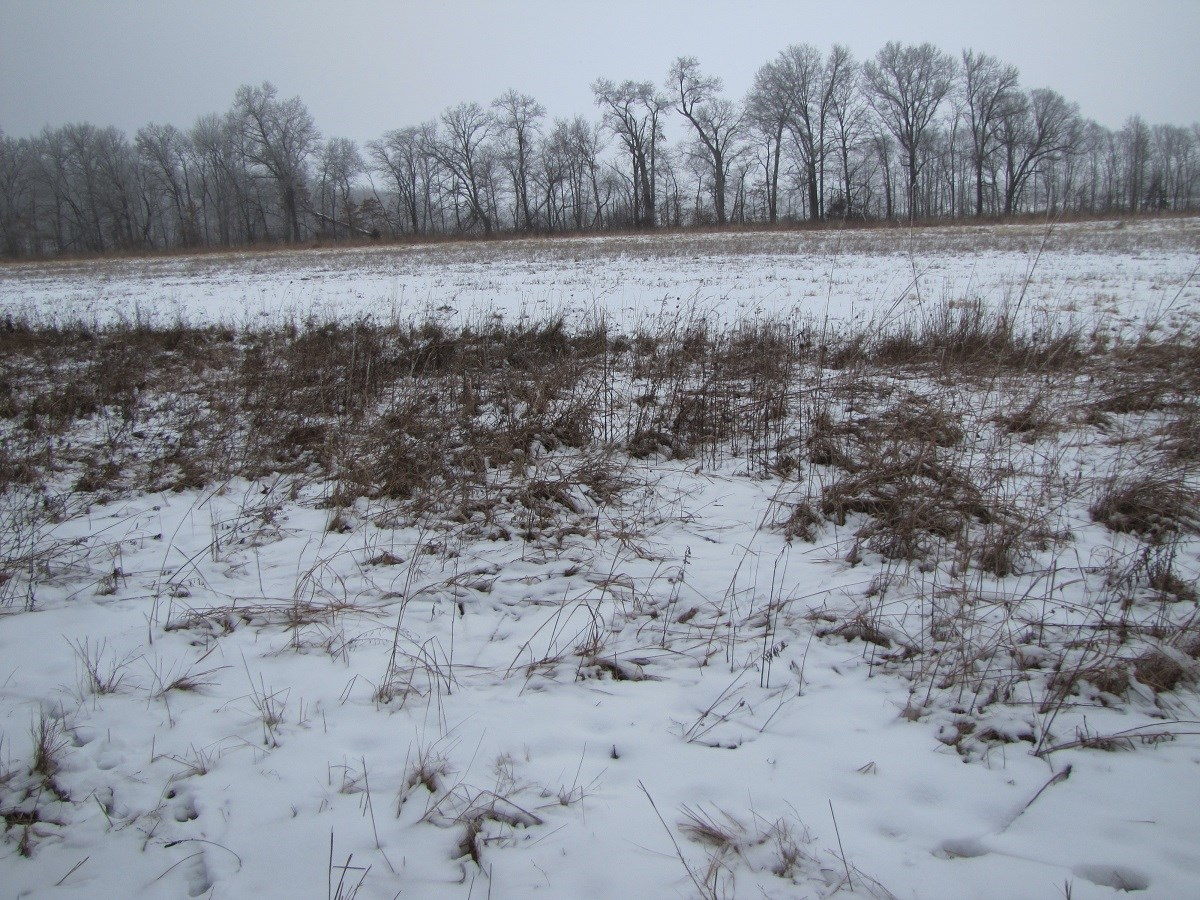 111.5 Surveyed Acres Of Hunting Land For Sale Northeast MO