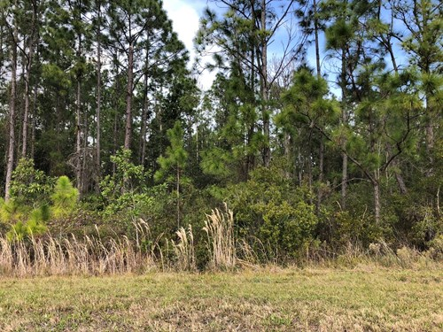 LAND FOR SALE, 2 ACRES, CENTRAL FLORIDA, FROSTPROOF