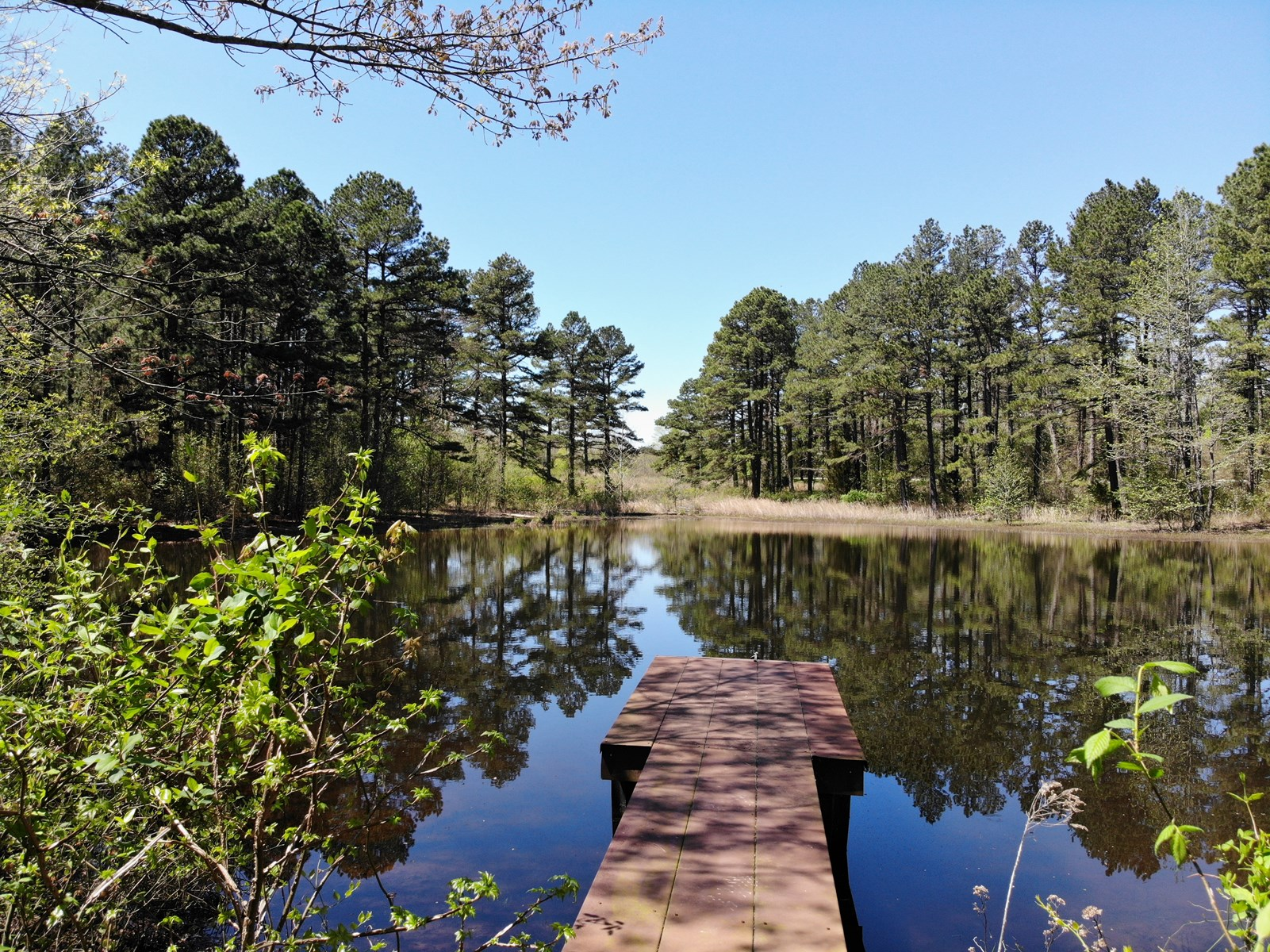 Arkansas Country Cabin On 48.65 Acres For Sale