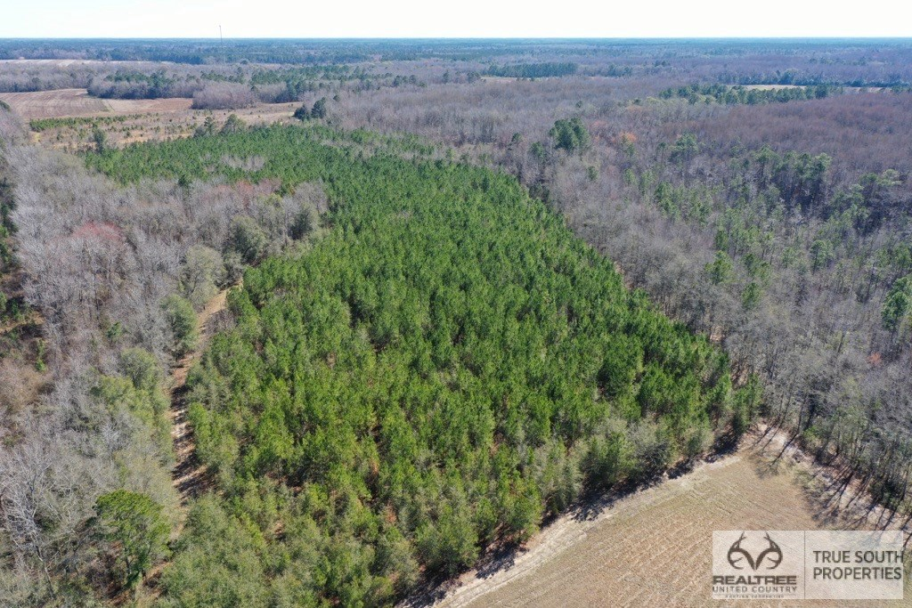 Estill Hunting & Recreational Land