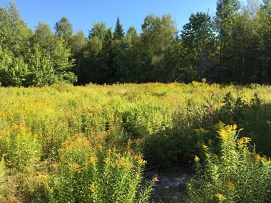 Coastal Region Hunting and Recreation Land For Sale