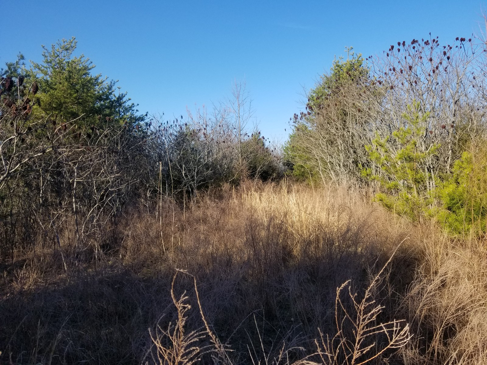 WAYNE COUNTY CLIFTON TN LAND FOR SALE MOUNTAINTOP LIKE VIEW