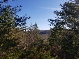 WAYNE COUNTY TN MOUNTAINTOP LIKE VIEW LAND FOR SALE 20 ACRES