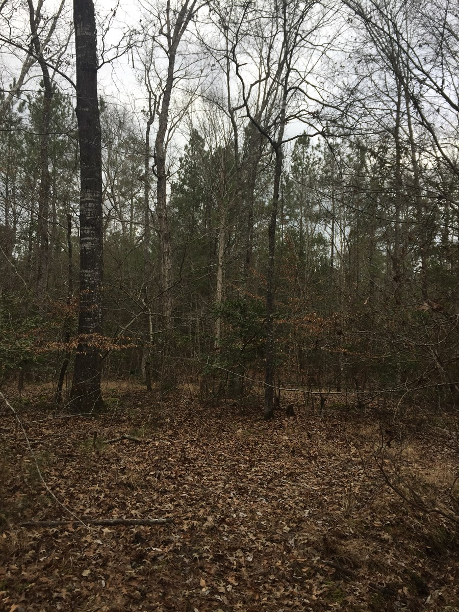 Southern AR Recreational Pine w/ Hardwood Creeks for Sale