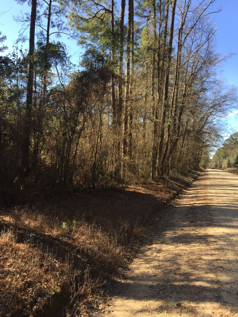 Rural Timberland w/ Home Potential near Junction City, AR
