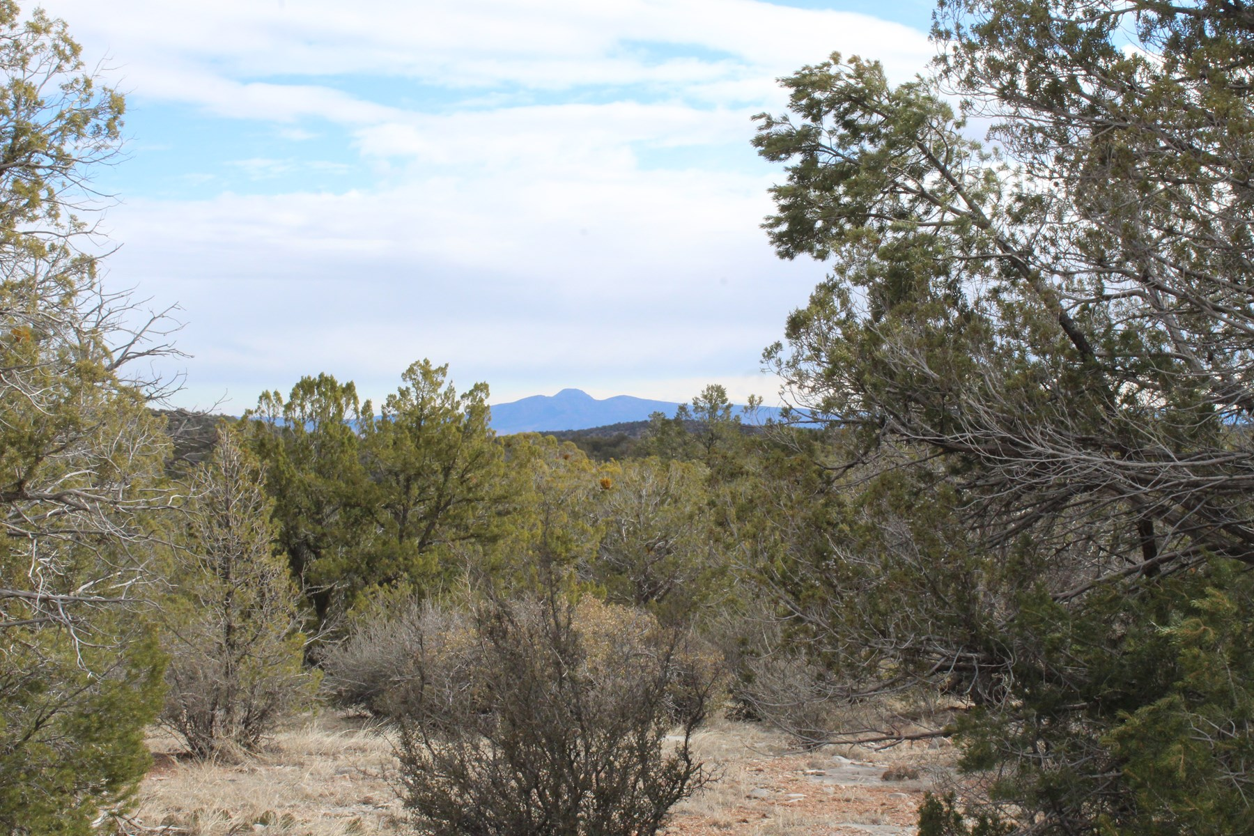 Mountain Acreage for Wildlife for Sale in Seligman AZ