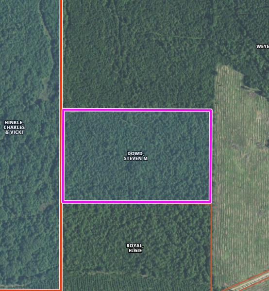 INVESTMENT/ PINE PLANTATION IN BOWIE COUNTY, TEXAS