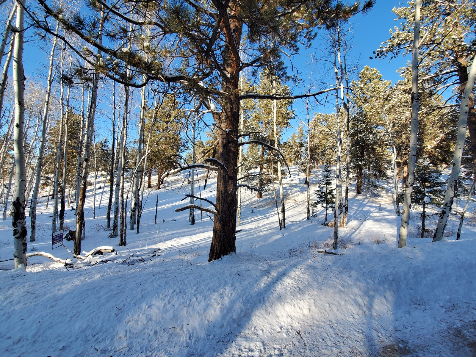 Land for Sale near Mueller State Park, Florissant, CO