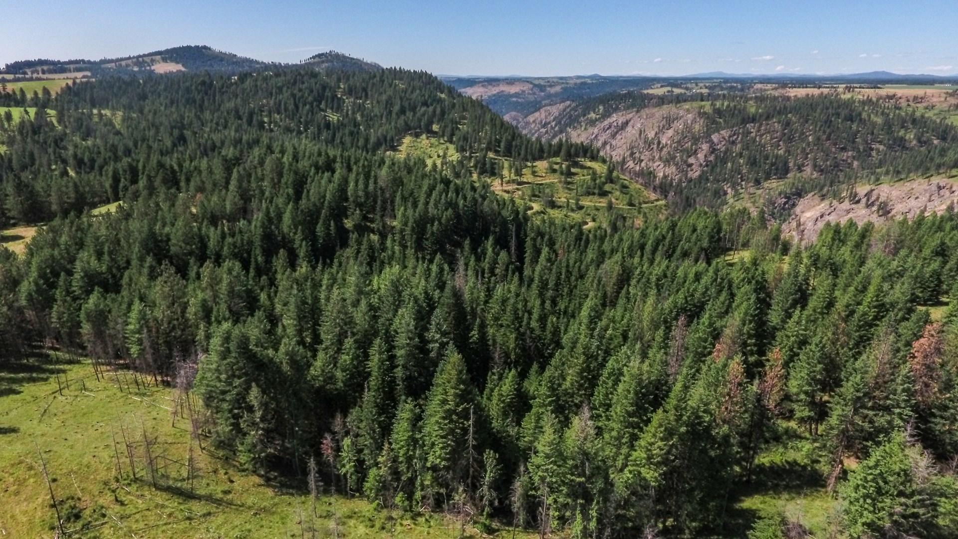 Farm & Ranch Land in Kamiah, Idaho, Timbered Hunting Land
