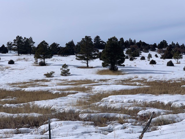 Large area west 40 + acres of Chama for sale 40 + acres