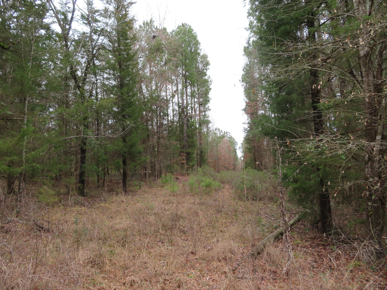 Land for Sale in East Texas, Cass Co.