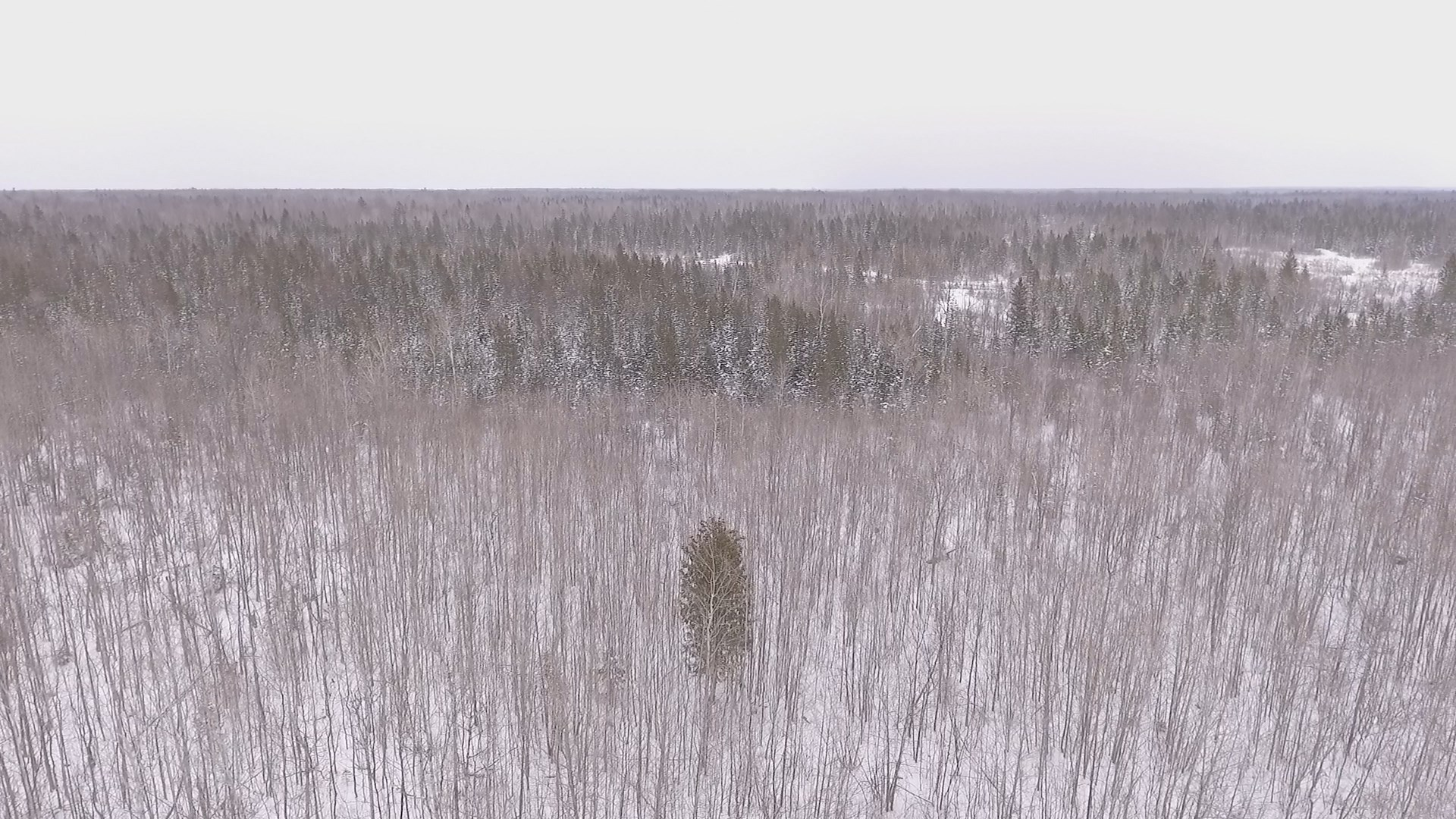 Northern Michigan Hunting