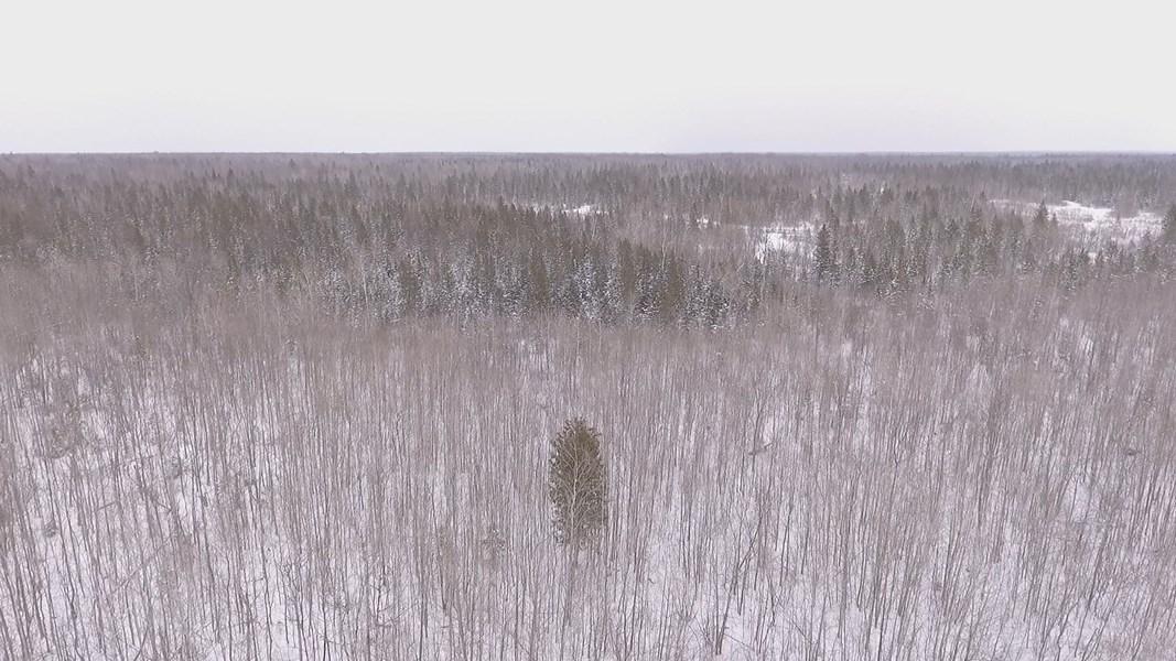 Northern Michigan Hunting