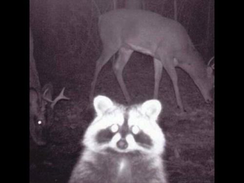 Hunting Land For Sale Presque Isle County Michigan Posen, MI