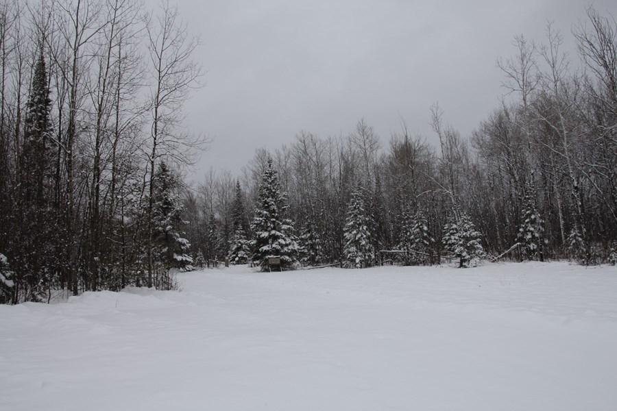Northern, MI Hunting Land