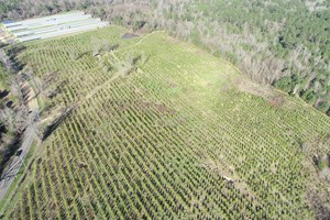 OLD FARM W/ PLANTED PINE TIMBERLAND FOR SALE NEAR STRONG, AR