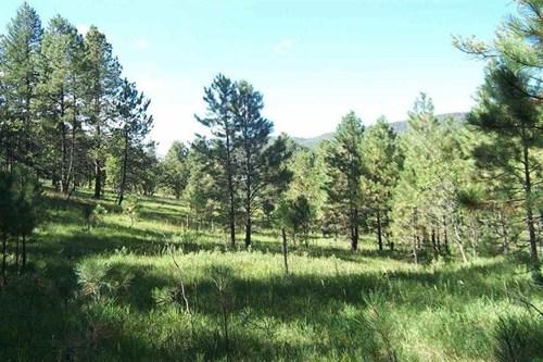 MOUNTAIN LAND CLOUDCROFT NEW MEXICO FOR SALE