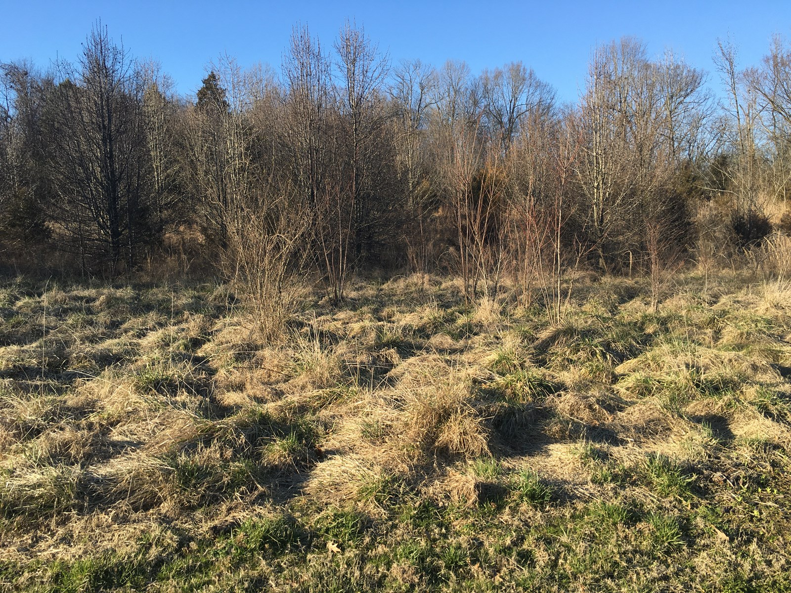AR land for sale in town, 3 city lots 1.67 acres Pocahontas