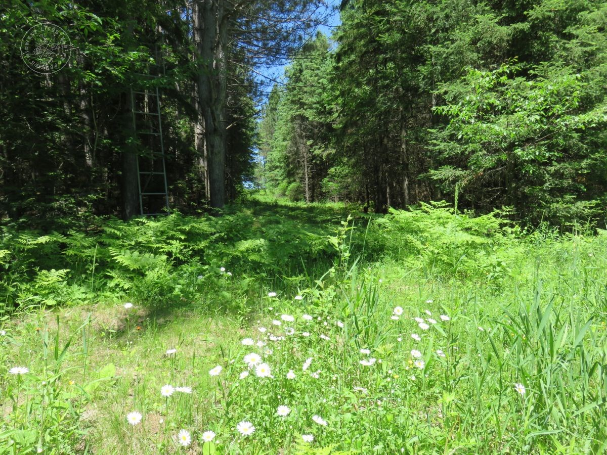 Large, Buildable, Hunting or Recreational Property Ashland