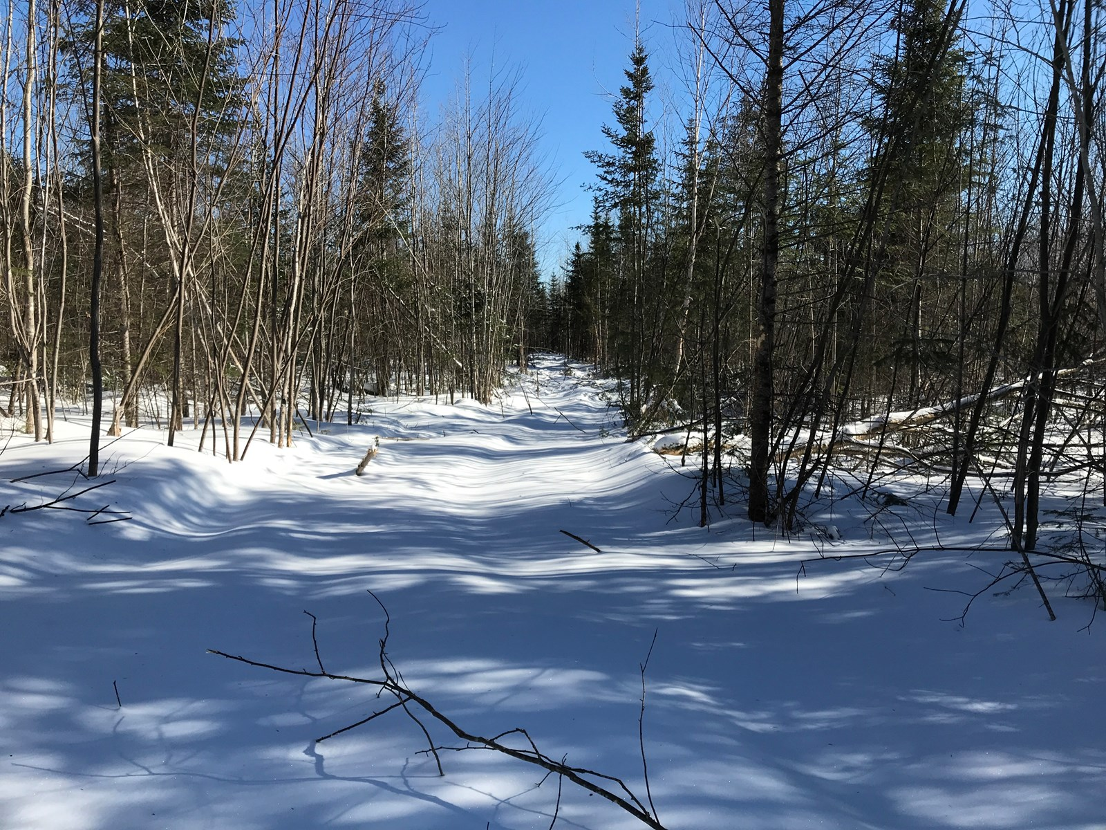 Home Lot For Sale in Northern Maine
