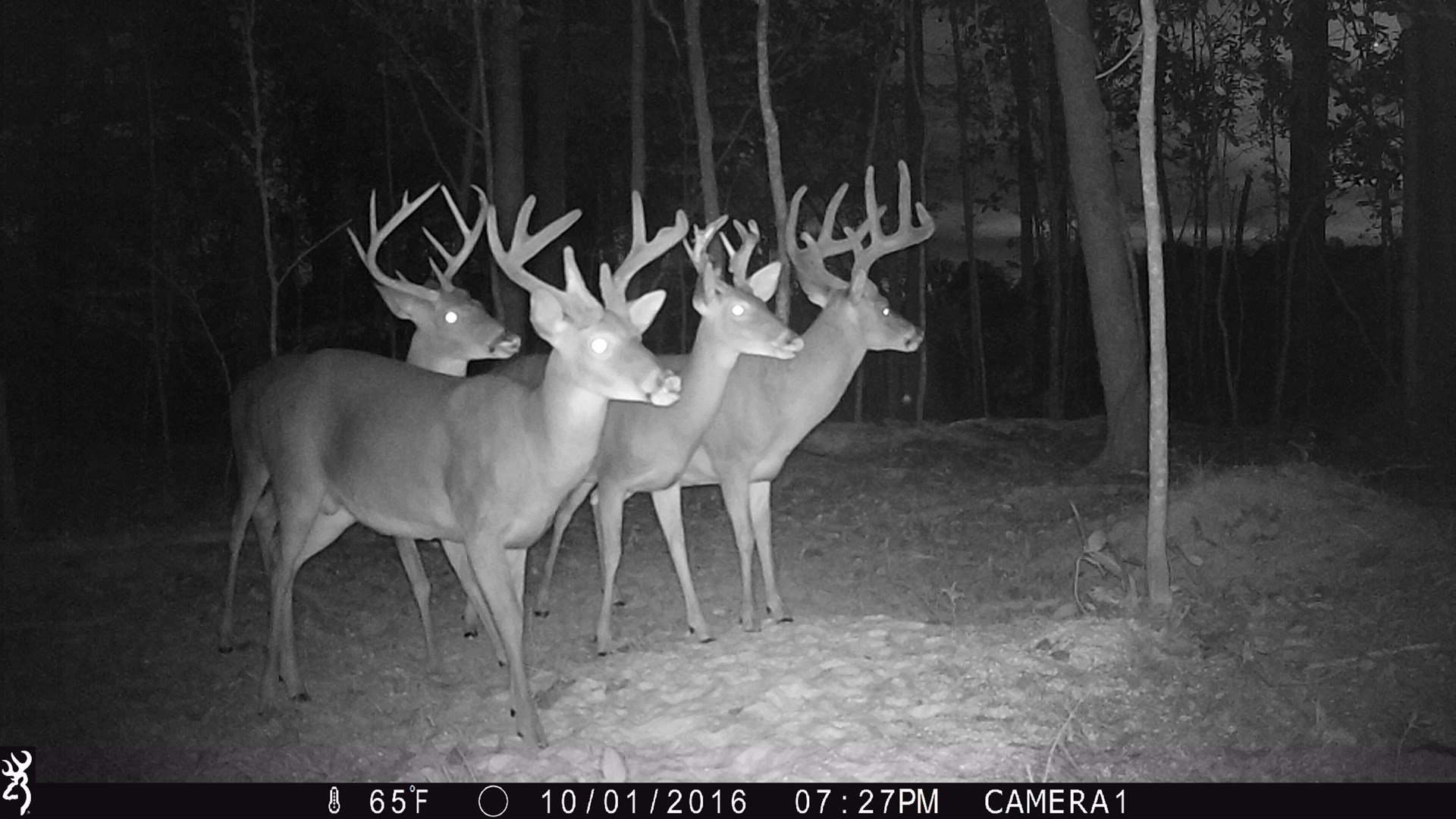 Prime Hunting and Timber Investment Property