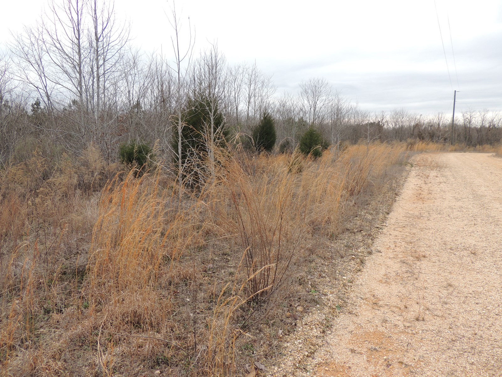VACANT LAND FOR SALE IN TN, HUNTING LAND OR LAND TO BUILD ON